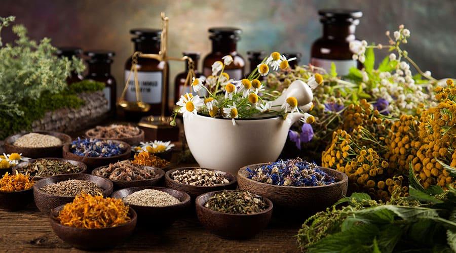 Свойства и применение лечебных трав