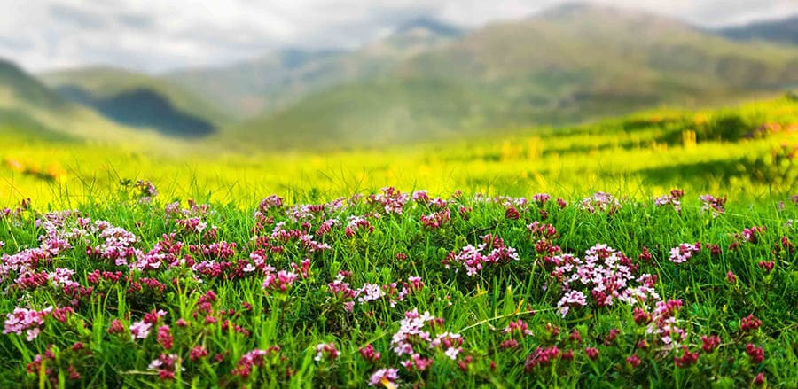 Лечебные травы и сборы